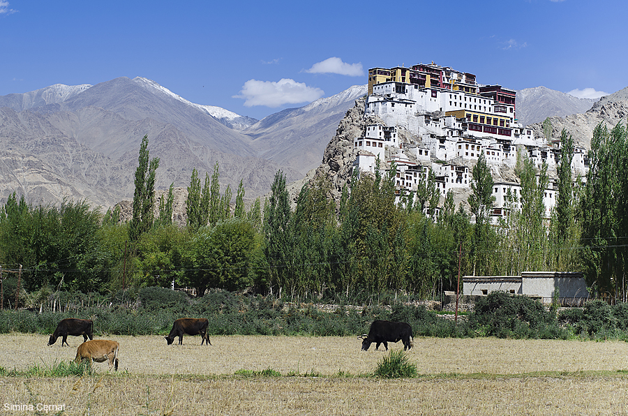 Buddhist monastery in Ladakh India