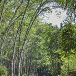 Central Jawa nature