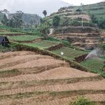 Rice fields in Dieng Plateau, Central Jawa, Indonesia