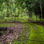 Botanical Garden Bali