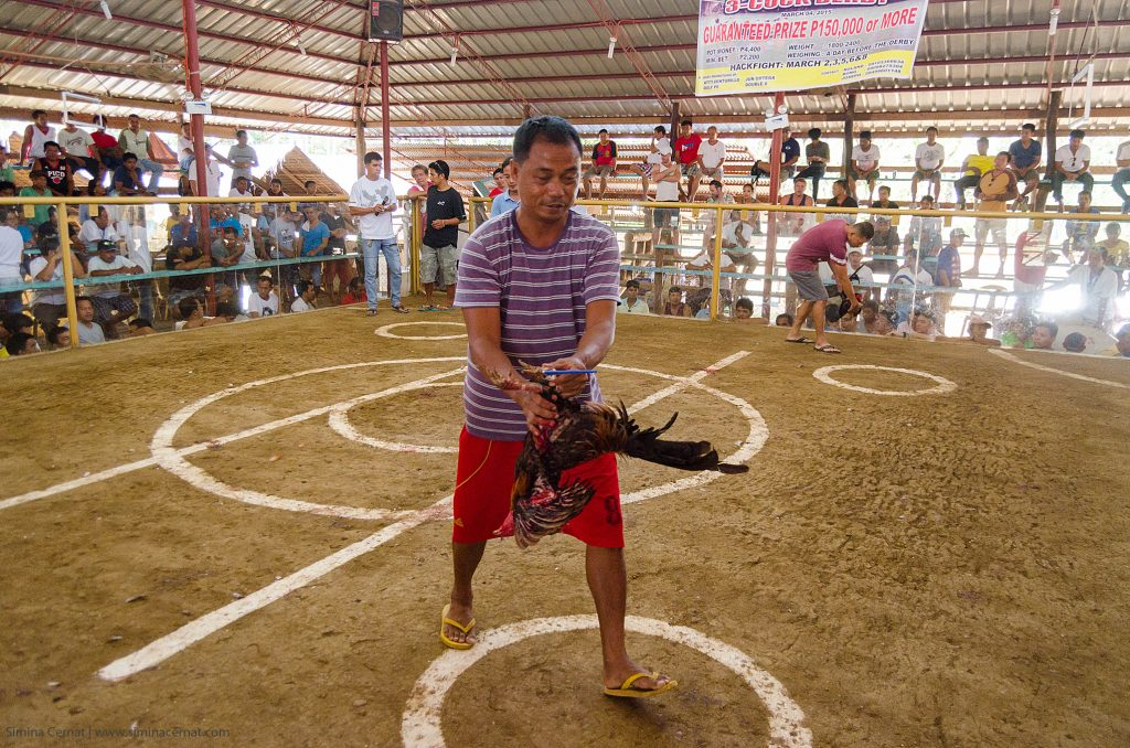 cock fighting in philippines