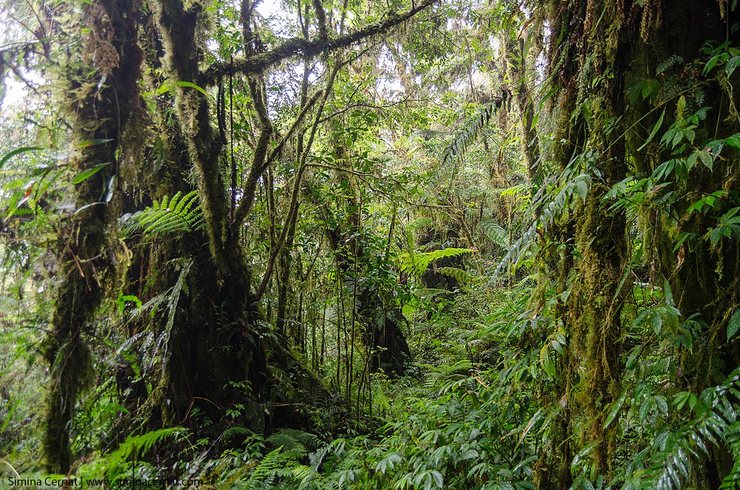 Traseul din jungla