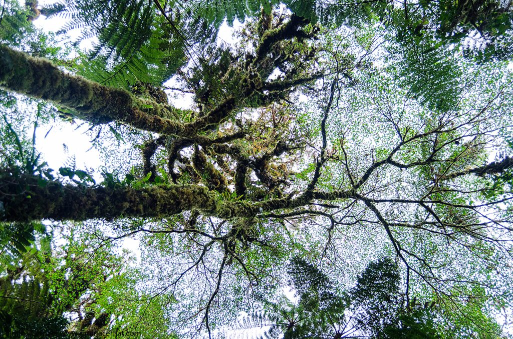 Copaci din jungla